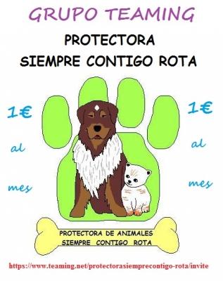 PROTECTORA SIEMPRE CONTIGO (ROTA)