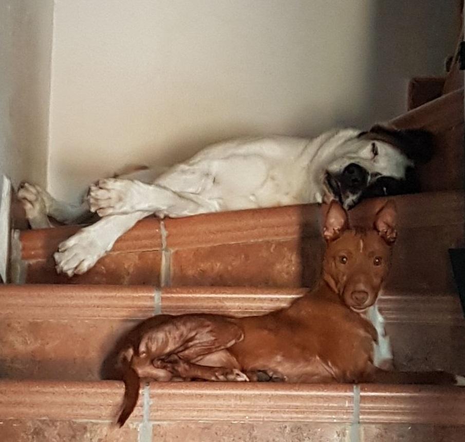 NECO-en-la-escalera.jpg