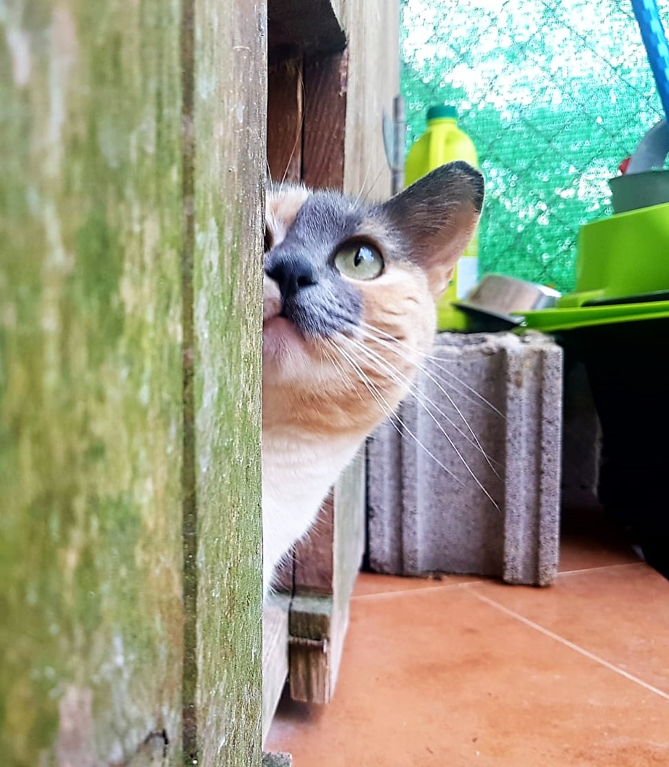 Lola-3.jpg