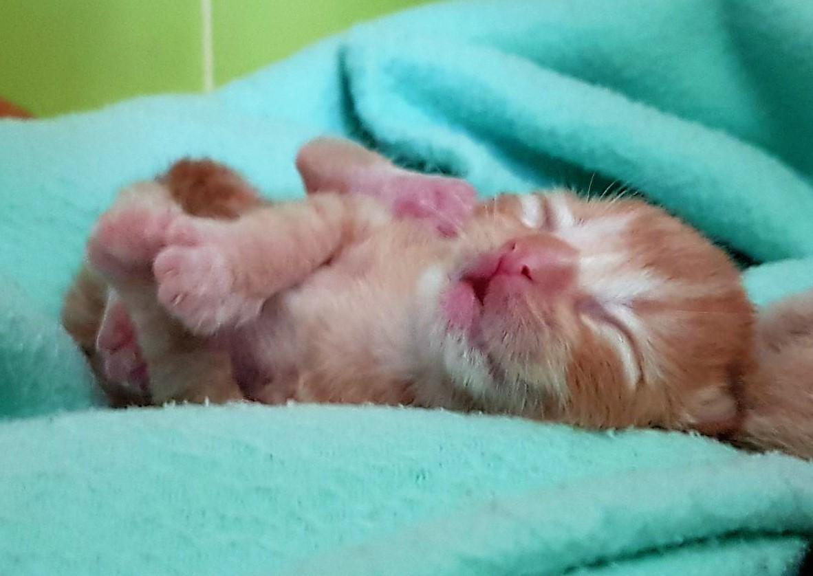 Aslan-bebé2.jpg