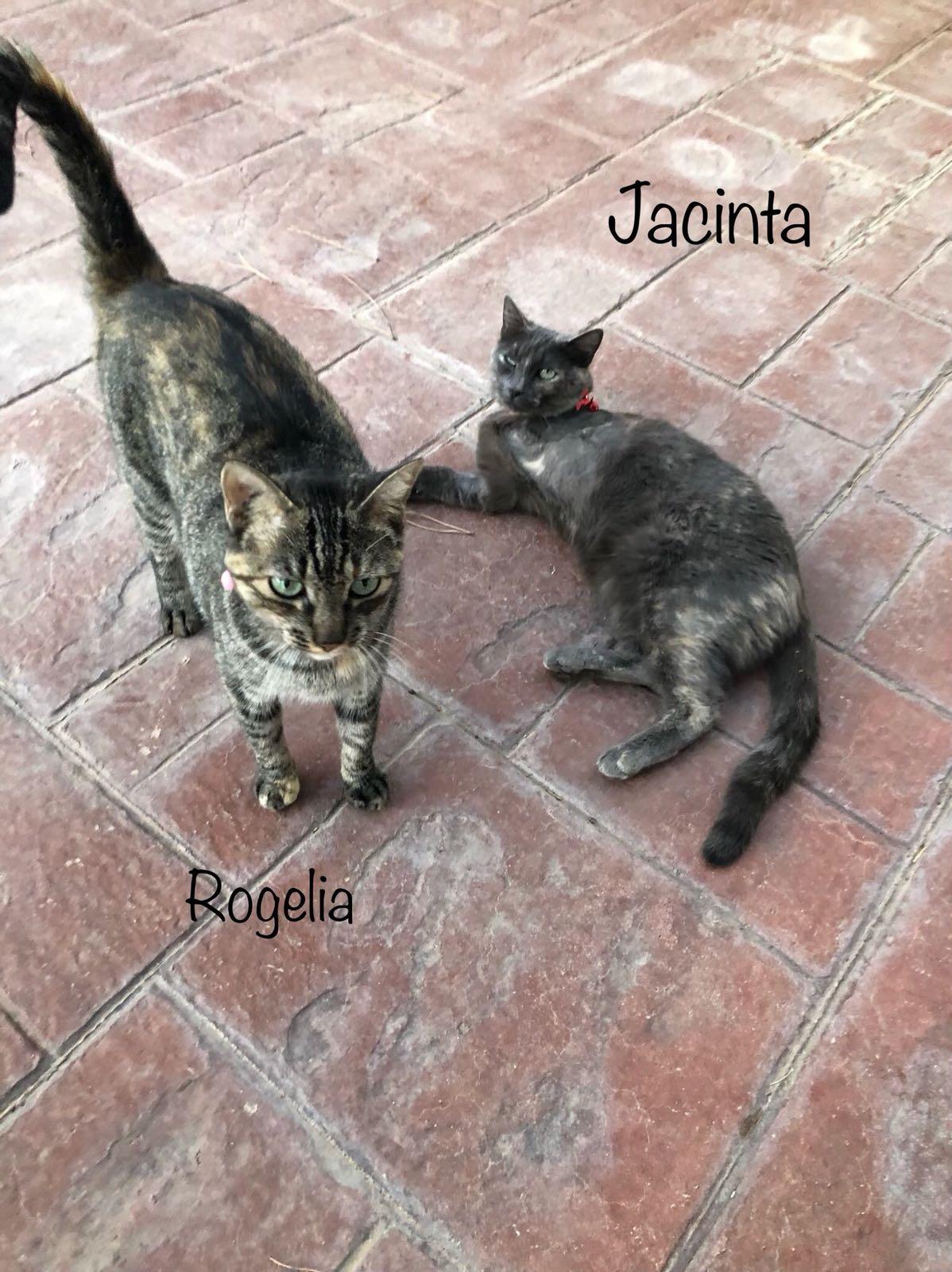 JACIENTA-Y-ROGELIA.jpg