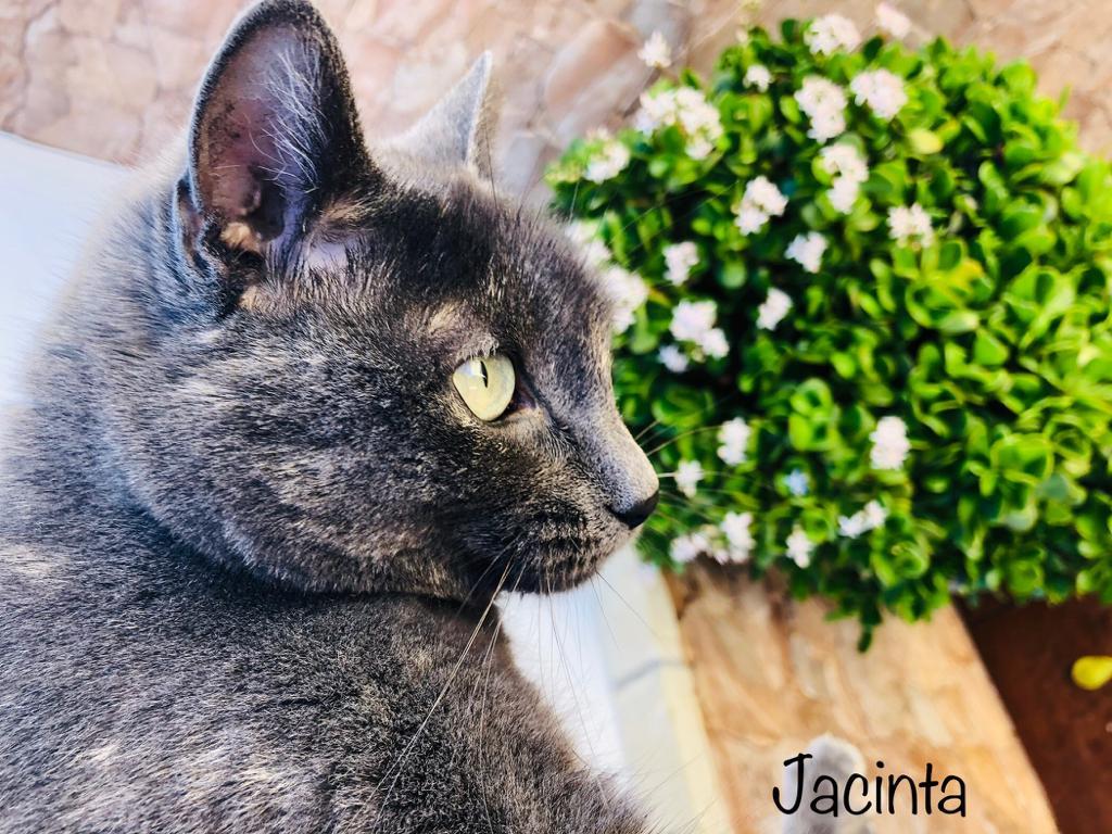 JACINTA-2.jpg