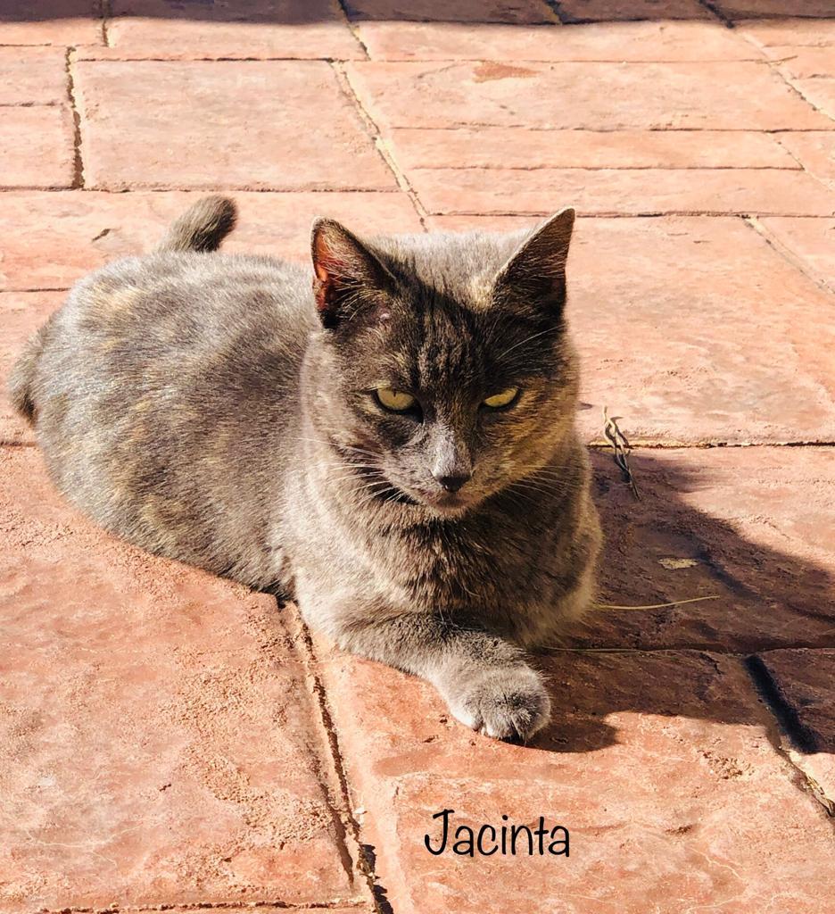 JACINTA-3.jpg