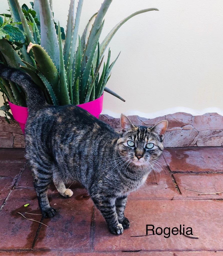 ROGELIA-1.jpg