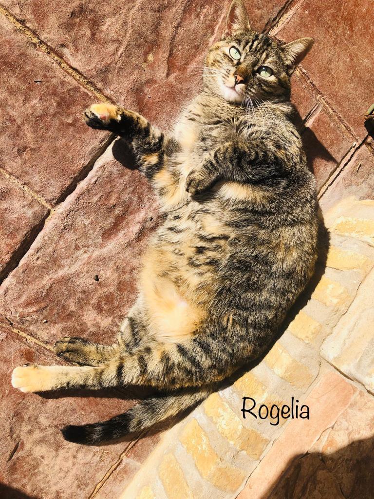 ROGELIA-2.jpg