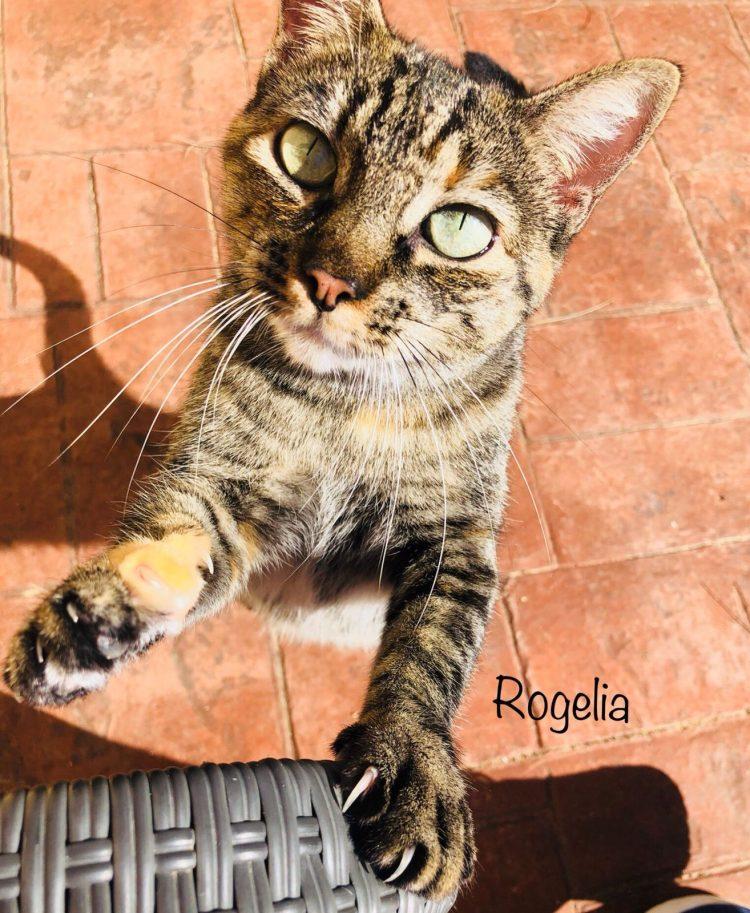 Rogelia