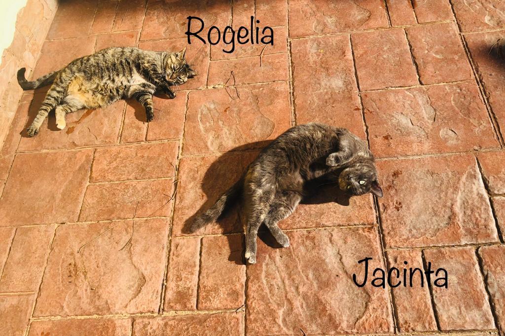 ROGELIA-Y-JACINTA.jpg