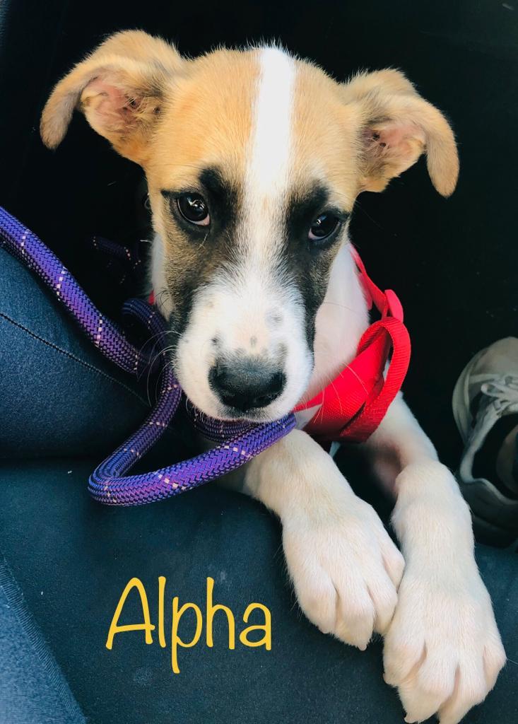 Alpha3-1.jpg