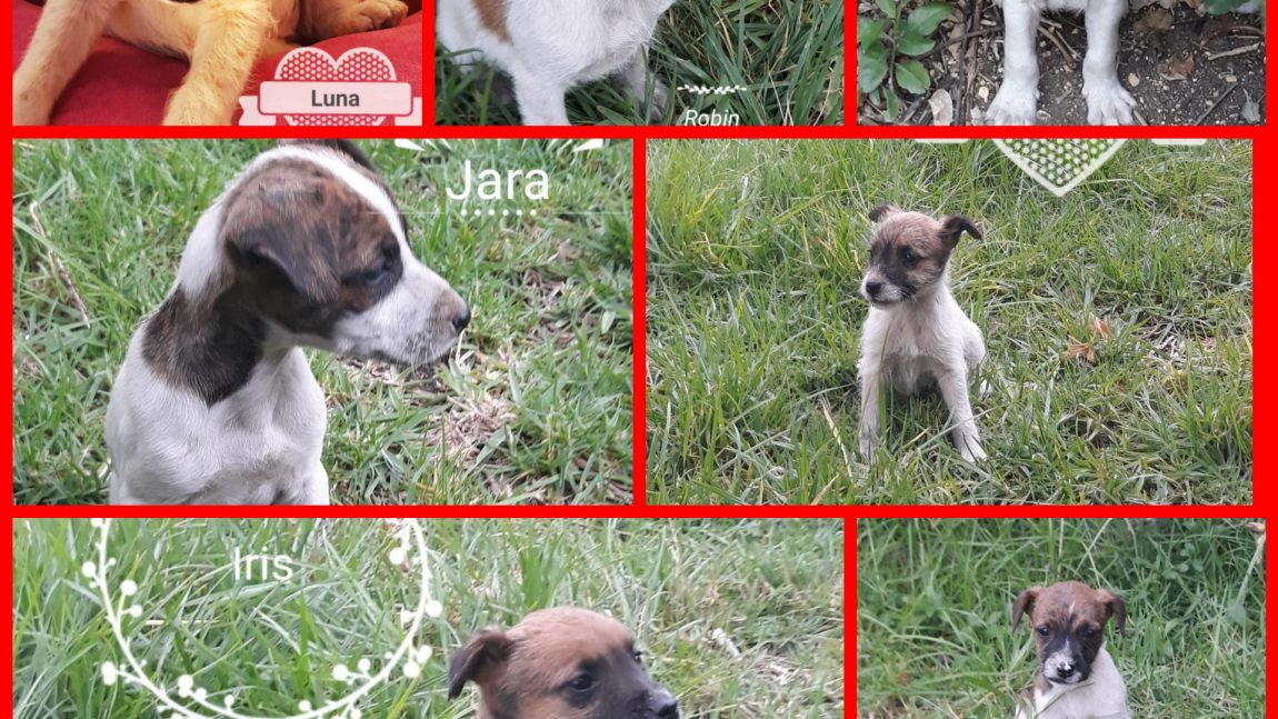 Se busca familia para estos 7 cachorros