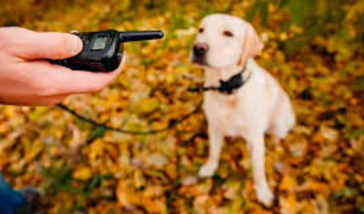 EL PICO DEL ICEBERG: Lo que los perros nos dicen con sus comportamientos «problemáticos»
