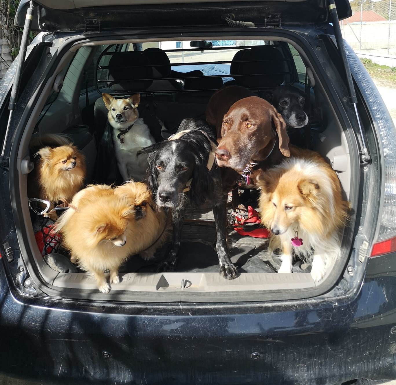 Nano-otros-perros.jpg