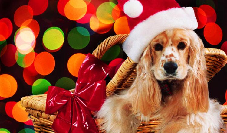 ¿Adopciones en Navidad? – Artículo por Mary Sánchez Tey de Pasion4Dogs