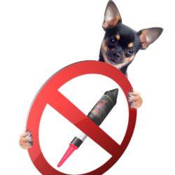Experta en comportamiento canino habla sobre el uso de la pirotecnia