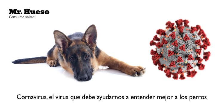 «Coronavirus, el virus que debe ayudarnos a entender mejor a nuestros perros» por Mr. Hueso