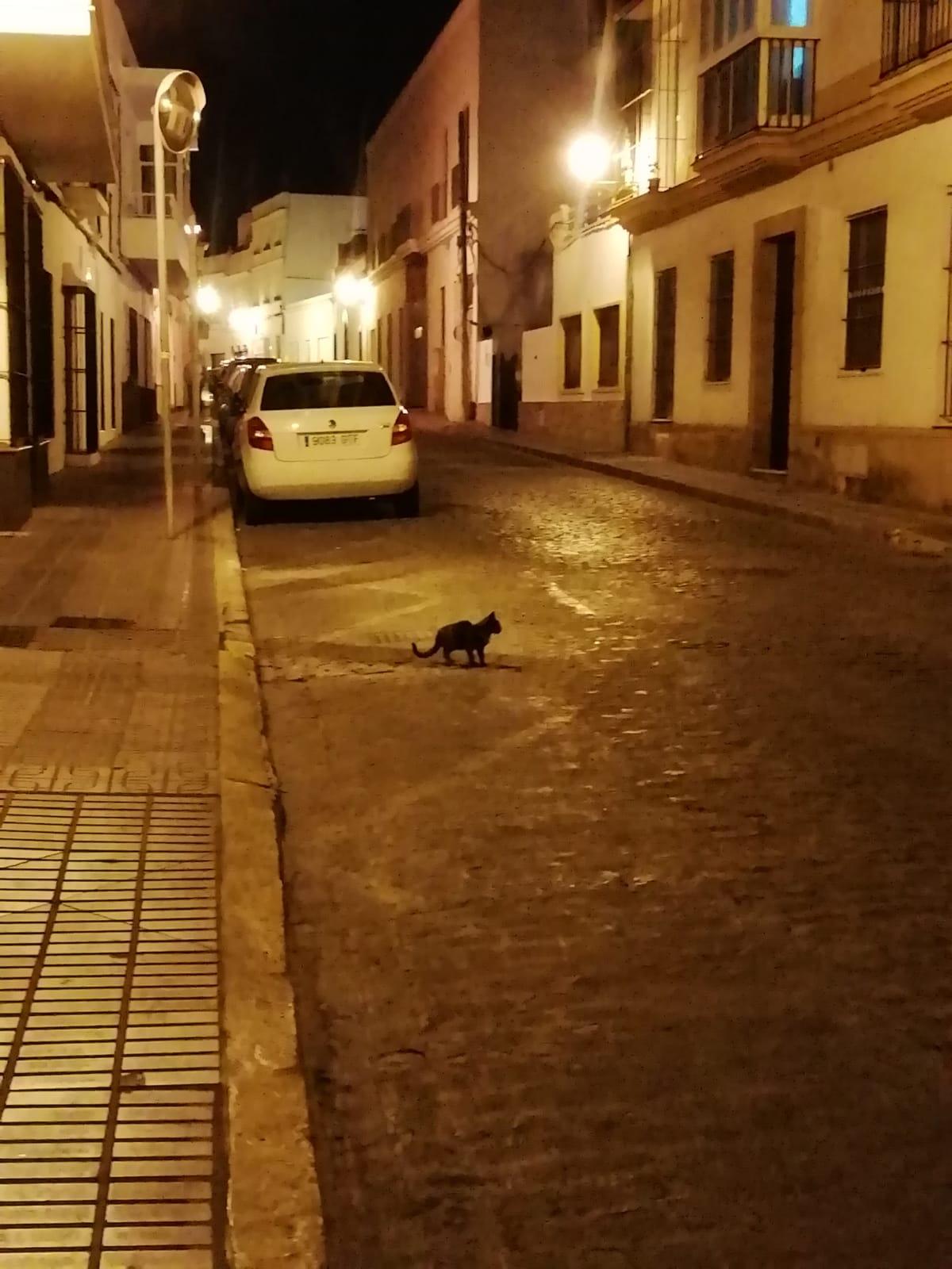 JUlia-calle.jpg
